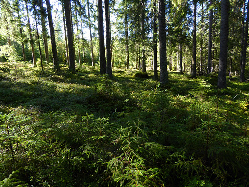 autumn forest september skog tuna höst knutshyttan