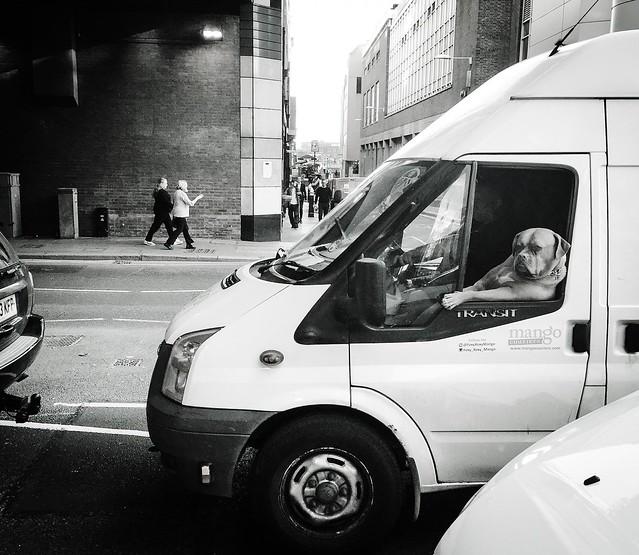 Dog gone traffic!