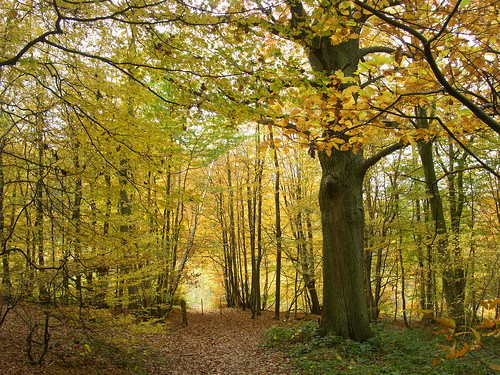 Beechwood near Cuxton Cuxton to Sole Street walk