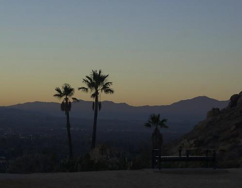 bob3052 mtrubidoux palmtrees rise sonya100 sun