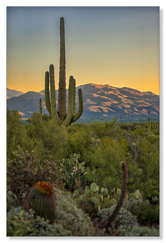 saguaronationalpark sunrise tucson arizona