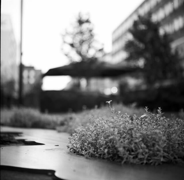 Street flower bokeh