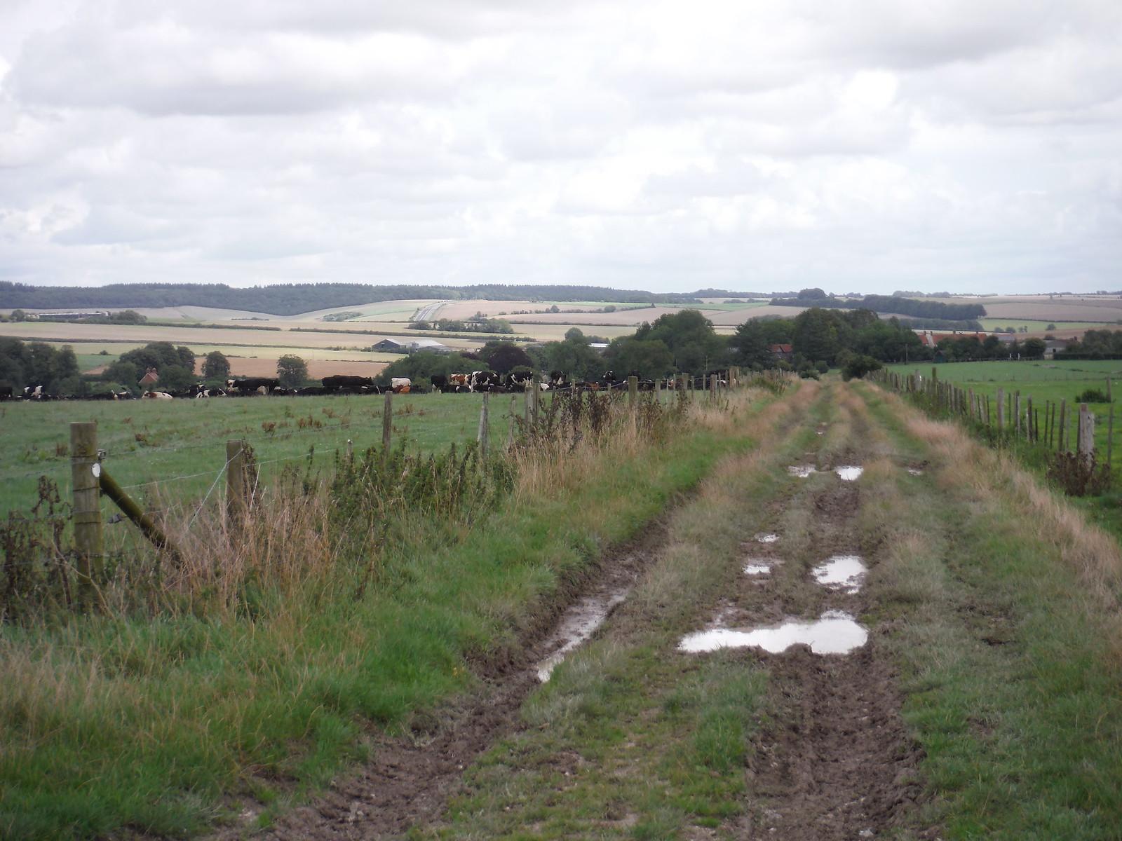 Wessex Ridgeway towards Hindon SWC Walk 248 Tisbury Circular via Hindon