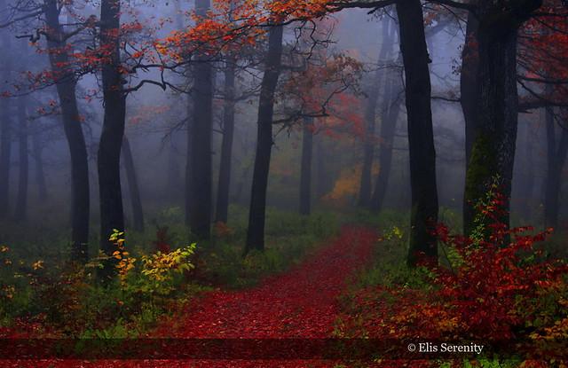 The Autumn Transition
