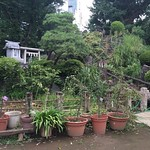 富士塚って、やっぱりおもしろいなぁ。関東の富士山信仰だけど、ピオトープみたいだったり、アースワークみたいだったり。鳩森神社にて
