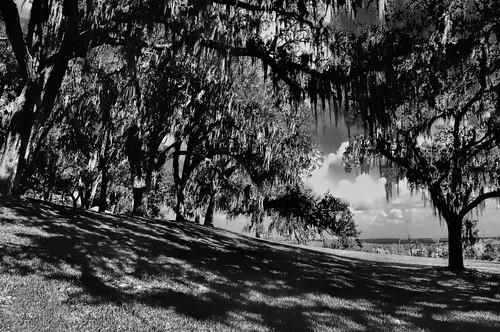 trees blackandwhite monochrome florida scenic monochromatic hills spanishmoss centralflorida ironmountain sunshinestate lakewales boktowergardens nikond90 jorgemolina