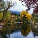 Samuel Forsyth- Evert Pierson Memorial Fishing Pond