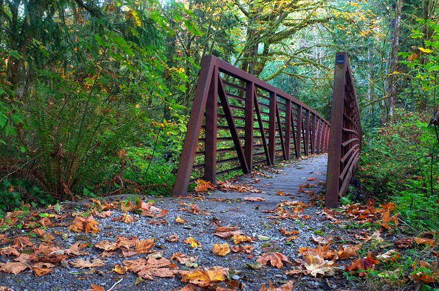 Bridge along Quinault Loop Trail, Olympic National Forest