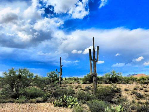 Tucson desert HDR 20161103
