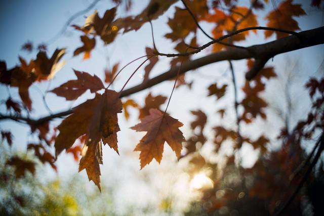 Last Bits of Autumn