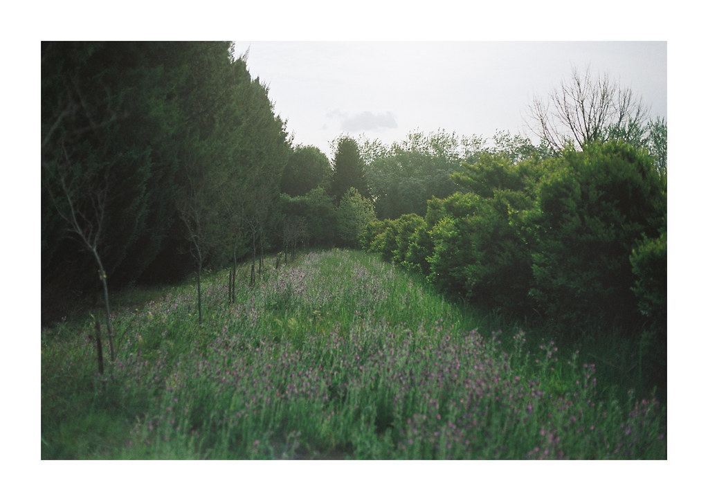 El jardín secreto de Funes   Película Kodak Pro Image 100 Ca…   Flickr