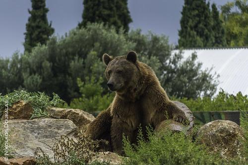 A bear called Vladimir