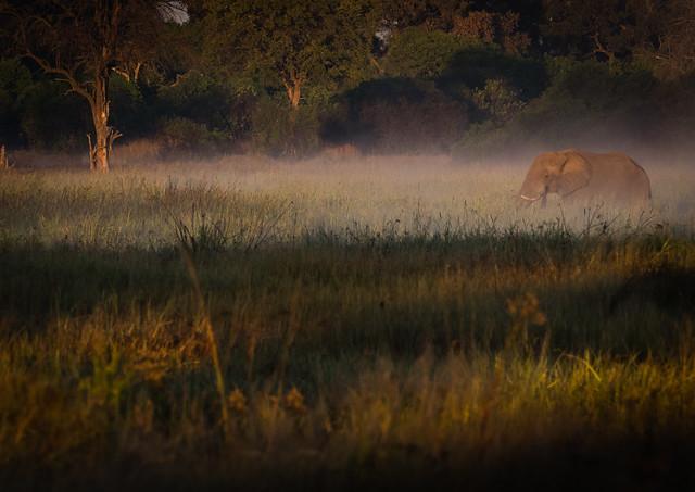 Okovango Morning