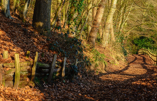 fence hurcott hurcottpoolwoodsnaturereserve kidderminster worcestershire uk england winter 2016 trees woods woodlands outdoor landscape shadows shade sunlight sunshine path walkway rustic serene nikonm d7100 tamron2470f28vc h