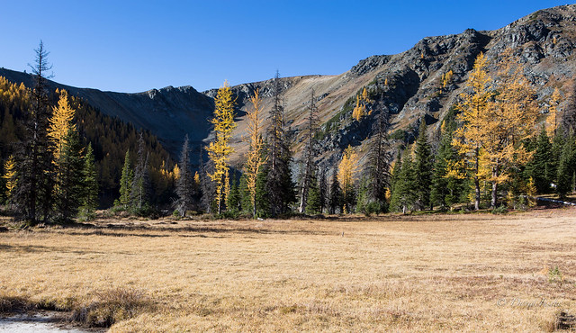 Border Lake meadow