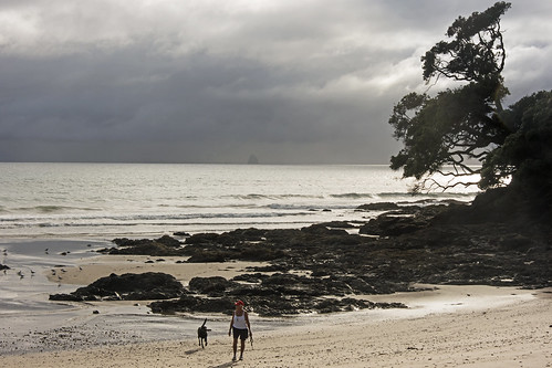 ocean sea newzealand dog seascape storm tree beach walking landscape person bay coast seaside pacific cloudy cove shoreline rocky stormy shore nz northland bream waipu lisaridings fantommst