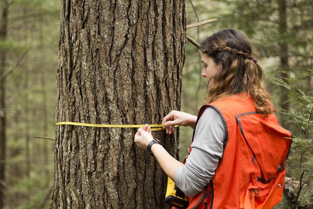 Sally Warm, Hemlock measurement, Bridgestone Firestone Centennial Wilderness WMA, White County, Tennessee