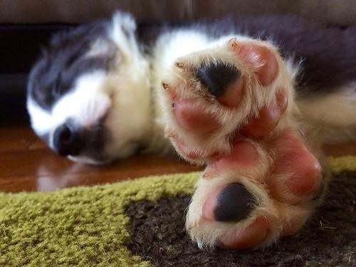 Mika Feet   by chris_starscream