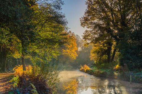 woking brookwood basingstoke canal water surrey still light reflection autumn trees mist calm sunrise early morning england country park outdoor photography michaelsowerbyphotographycom canon 5dmarkiii tree foliage wow