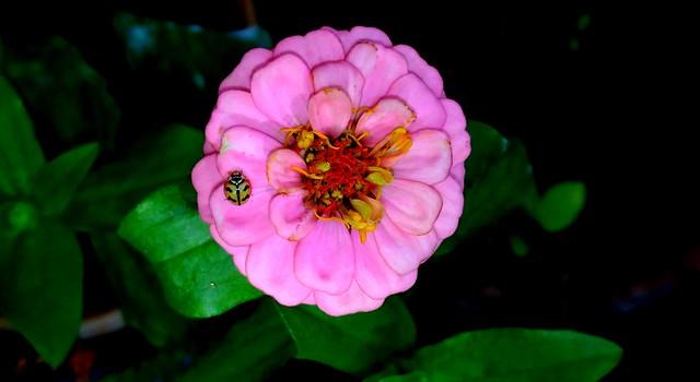 Bug searching Nectar...Bangalore