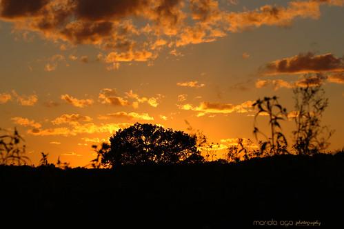 park light sunset summer sky orange plants sunlight black tree grass silhouette clouds evening glow dusk meadow thegalaxy