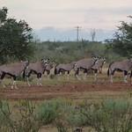 Po, 03/26/2012 - 08:08 - Afrika 2012