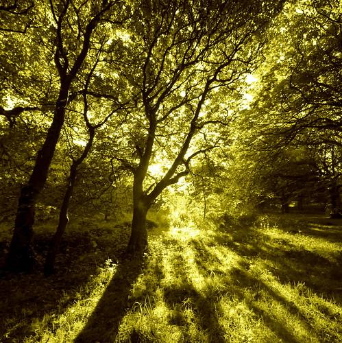 sunset sunrise canon scotland aberdeenshire aberdeen canoneos500d thewildwood