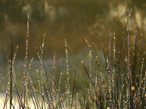 morning autumn mist grass sunrise sparkle dew