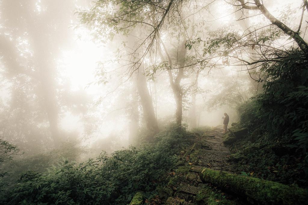 山中迷霧 溪頭森林遊樂區