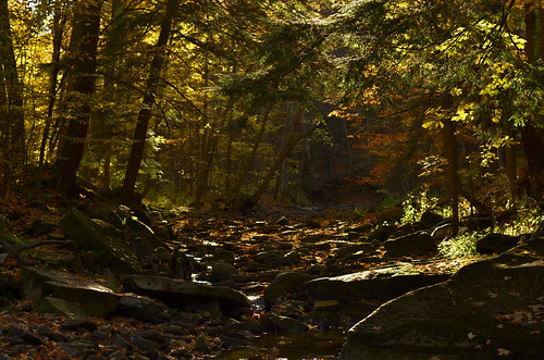 trees rocks raw autumncolours grimsby brucetrail fortymilecreek greensceneexcellence capturenxd