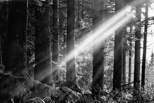 Light in Blackforest...