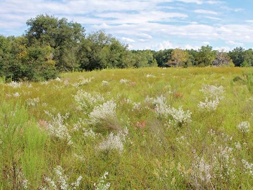 landscape field brush flowers wildflowers trees citrussprings florida
