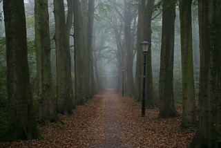 Foggy Path | by *rboed*