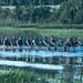 2015 Dragon Boat Races