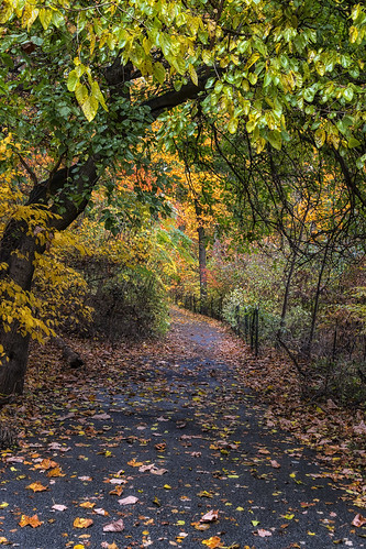 road park city nyc newyorkcity autumn trees ny newyork tree fall tourism nature leaves forest canon walking landscape outside eos woods fb outdoor path walk seasonal citylife queens bayside serene gothamist dslr touristattraction iloveny cityliving ilovenewyork ilovenyc alleypond 70d nycpark alleypondpark garyburke nyctravel oaklandgardens klingon65 nycdetails canoneos70d