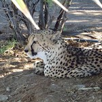 Pá, 03/30/2012 - 08:30 - Afrika 2012