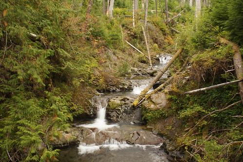 waterfall washington rainforest olympicnationalpark