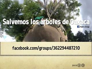 Salvemos los árboles de Oaxaca