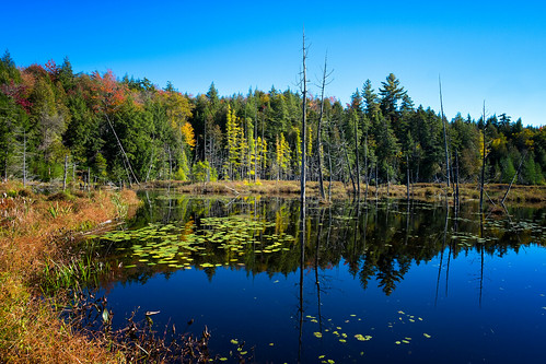 reflection forest pond swamp nordic northern beaverdam