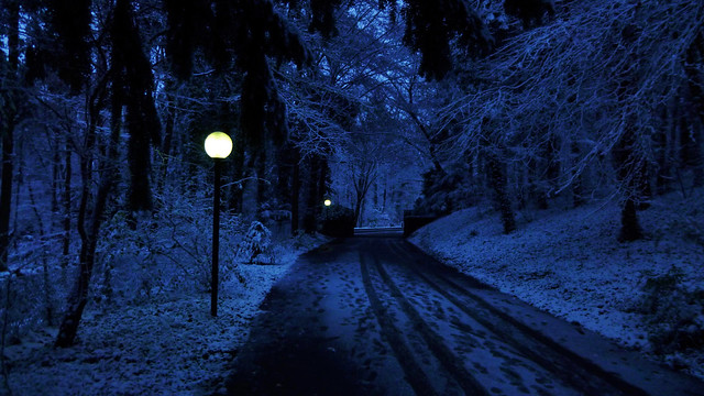 Atmospheric Lonely Winter Road ❄️❄️