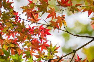 2015-11-11 武蔵野公園 001-2 | by shiro82