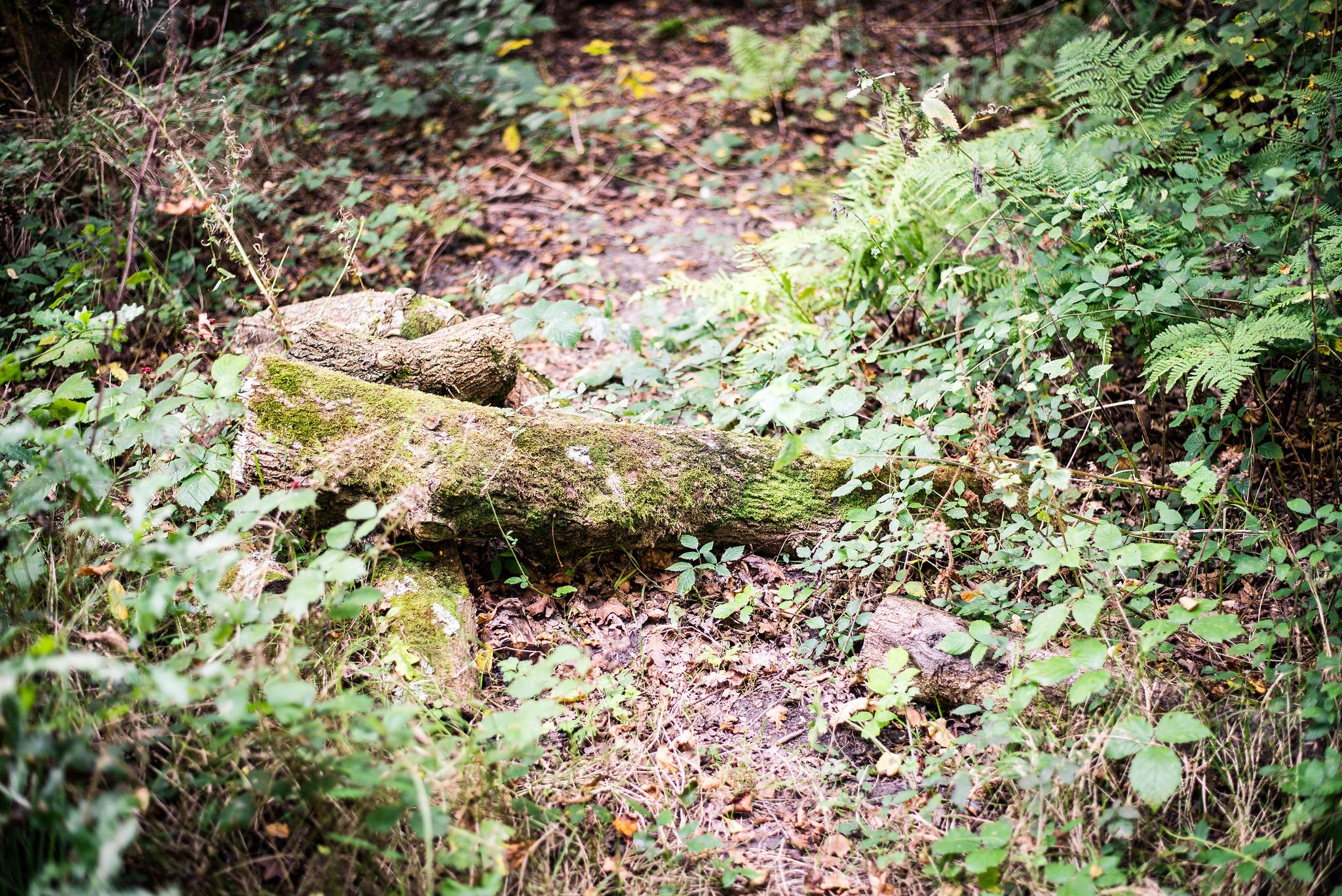 Mossy Fallen Branch