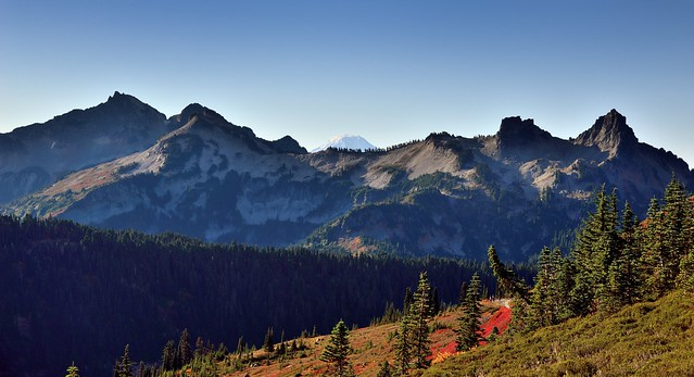 Hillsides of Evergreen Trees and Mountain Peaks Beyond (Mount Rainier National Park)