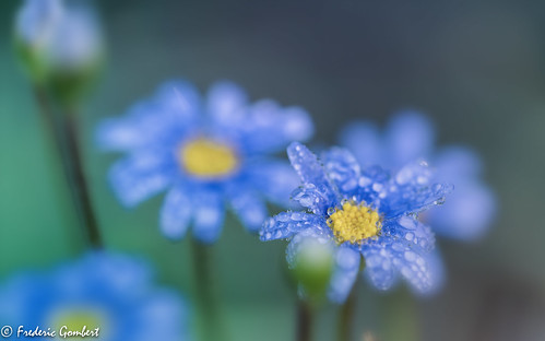 autumn droplets ( but later ) | by frederic.gombert