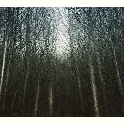landscape winter outdoors nikon nature birch trees jeanmarie jeanmarieshelton