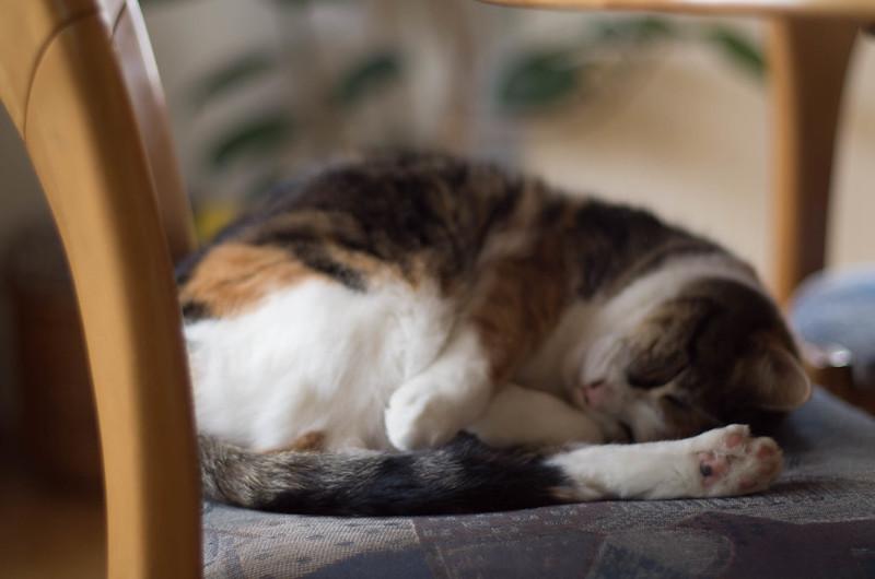 catsleeping.jpg