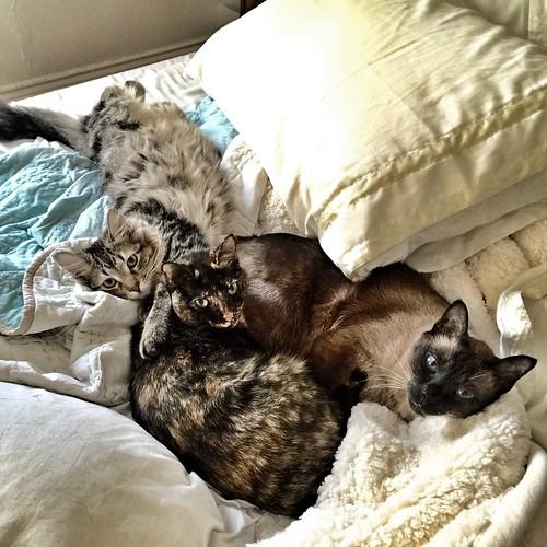 Friendship is cuddling on a Saturday morning.