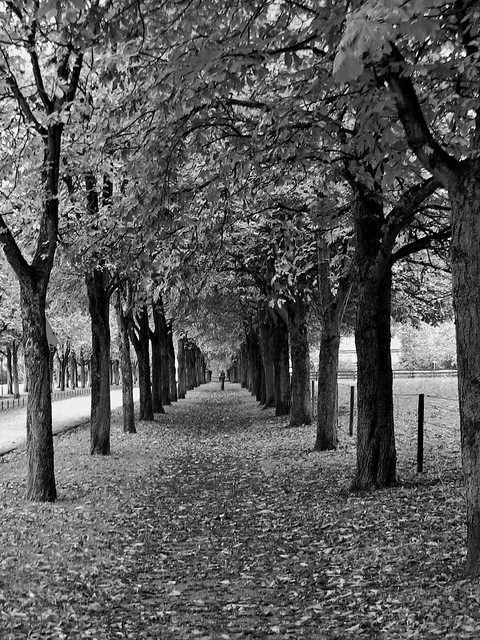 Baumallee in black and white , 73374/5873