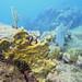 Saba bank expedition and Sint Maarten 2015 underwater