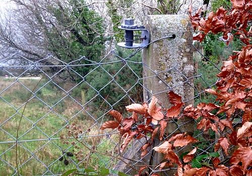 trees ireland irish colour field leaves fence garden landscape wire scenery cork foliage lichen newmarket beechtree hff iphone5 2015onephotoeachday